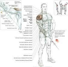 3 типа упражнений которые помогут накачать широкие плечи