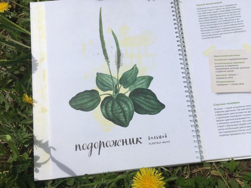 Книга, после прочтения которой вы захотите с ребёнком сделать свой гербарий