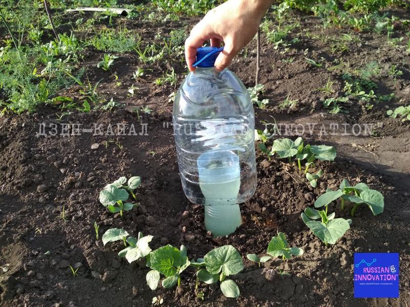 Увидел простейший капельный полив из двух пластиковых бутылок, в котором исключена вероятность засора, и сделал себе такой же