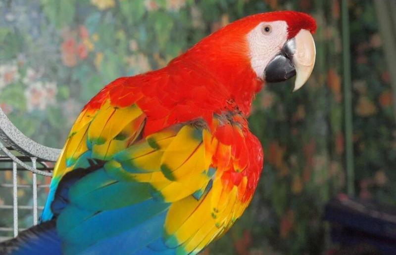 Аида Мошеевна испуганно оглянулась, а попугай рассмеялся хохотом гадкого клоуна, и сказал: -Фу-у-ууу! Ну блин Аидка ты даешь...