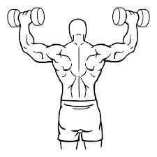 Почему жимы не увеличивают ваши плечи
