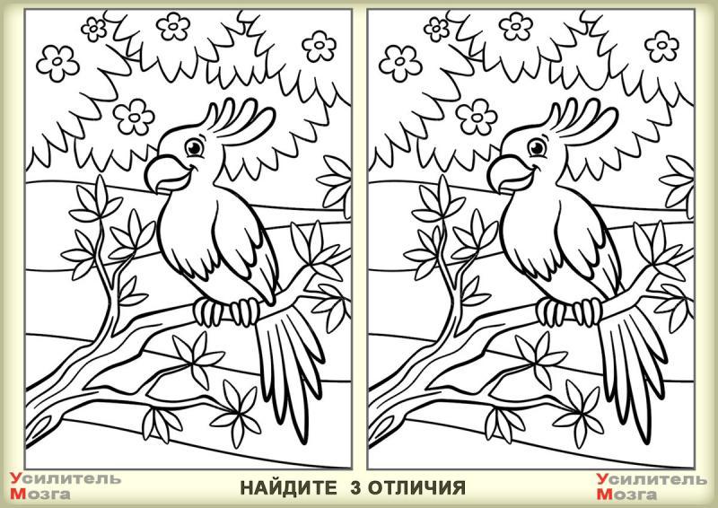 Сможете найти три отличия на картинке? Тест на внимательность