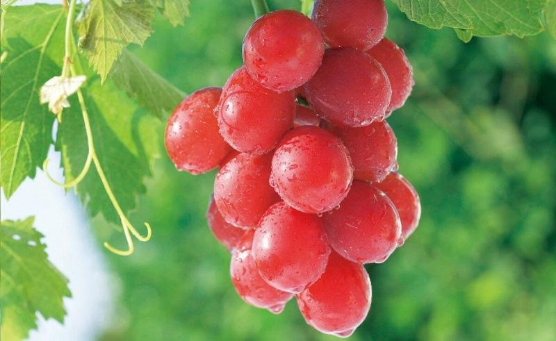 Мармелад из виноградного сока с агар-агаром