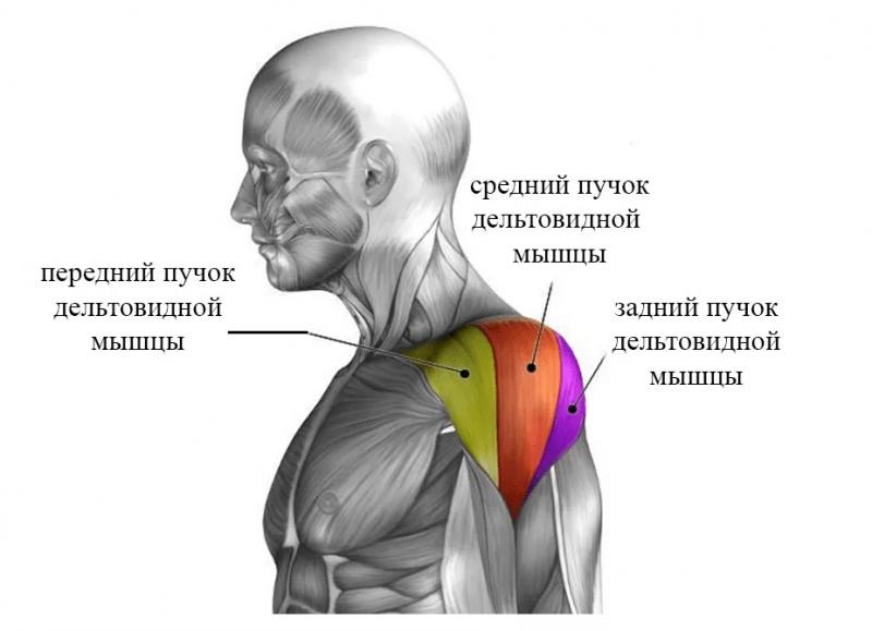 Задняя дельта, 3 изменения в привычных упражнениях для лучшего роста