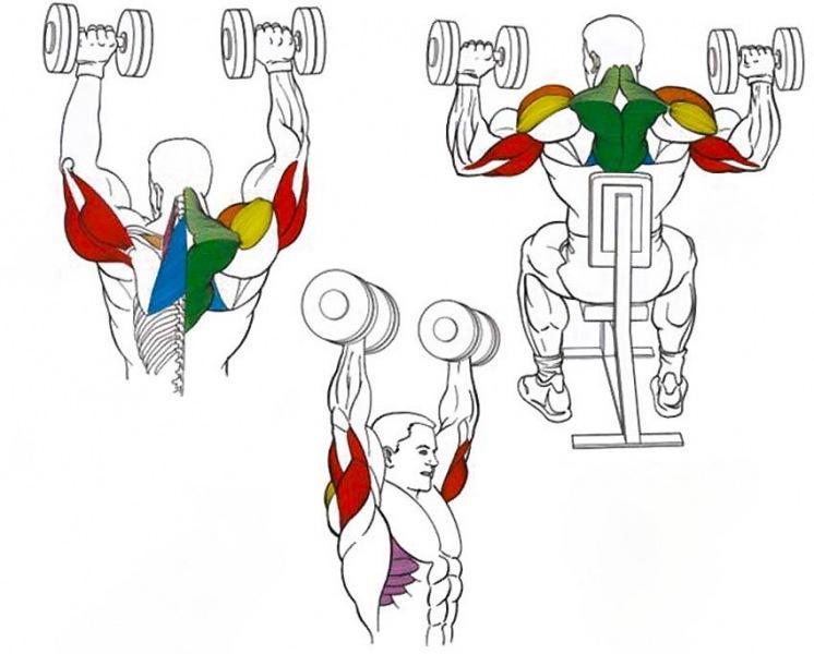Большие и сильные плечи. Жим на плечи – снижаем риск повреждения суставов