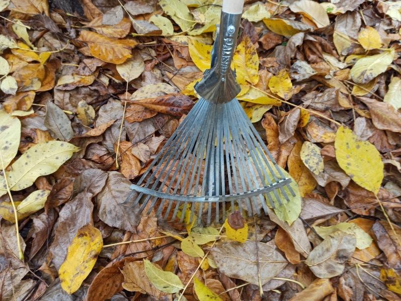 Лопату в руки беру редко, грядки никогда не копаю, а земля как пух: делюсь своим опытом